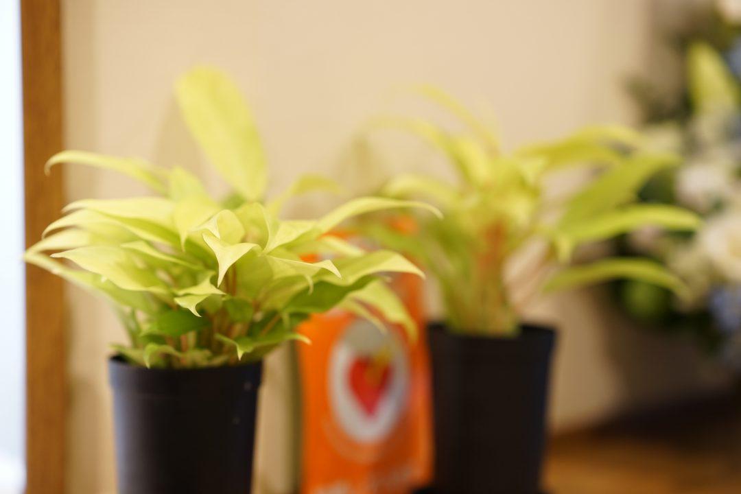 下馬内科クリニックの植物